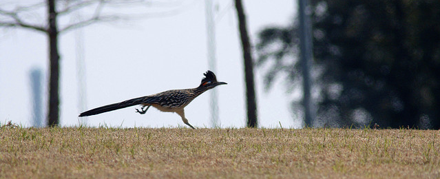 RoadRunner Featured Image