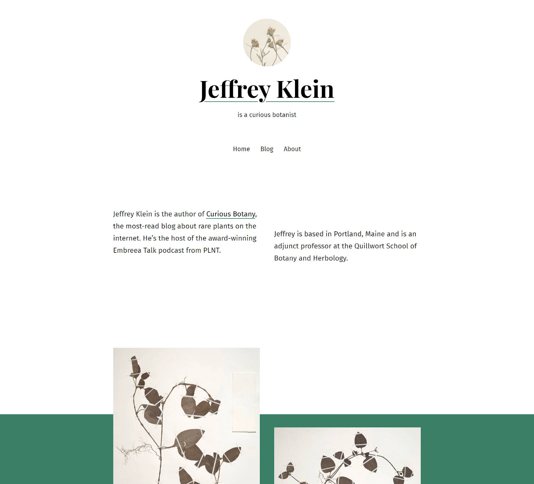 Decorative screenshot of the Seedlet WordPress theme.