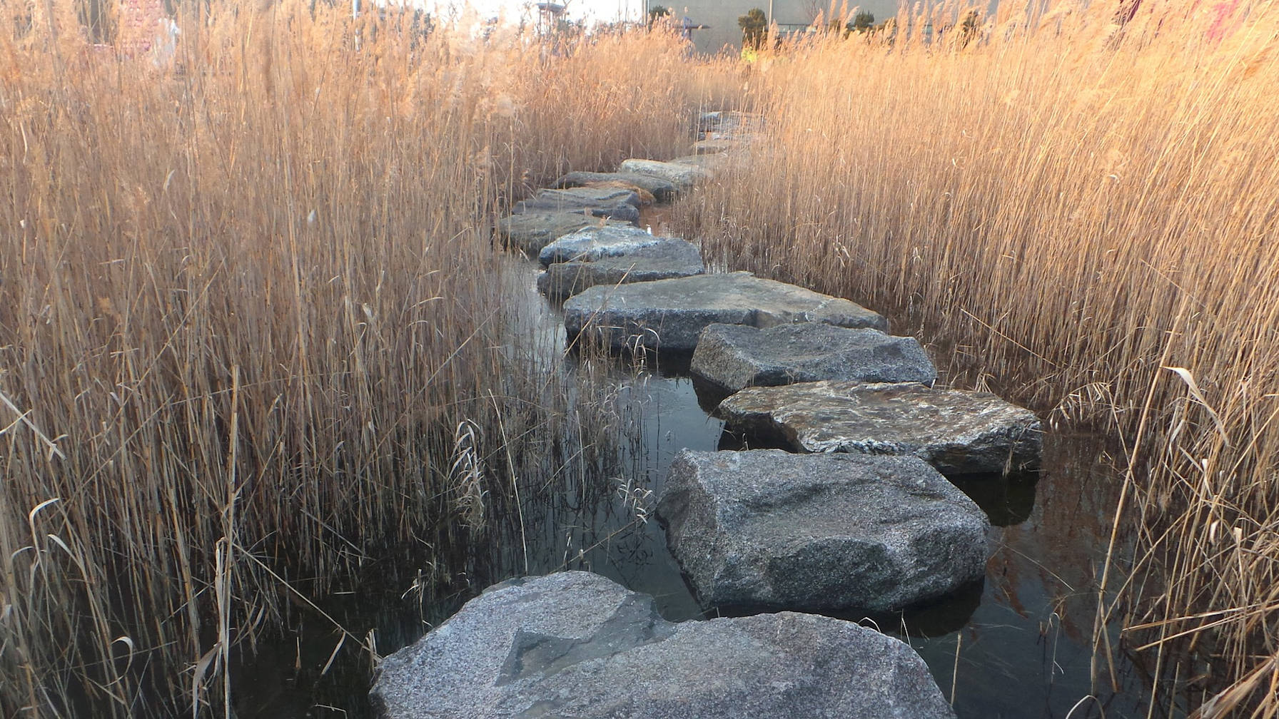 Decorative image of stepping stones between reeds.