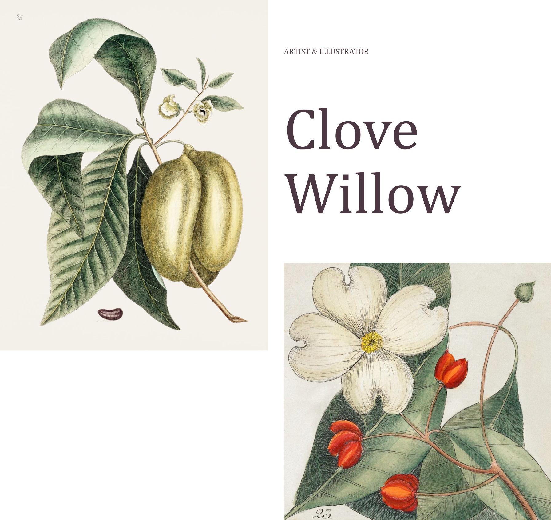 Sezione di introduzione della pagina con colonne irregolari e due immagini basate sulla natura.